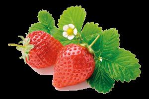 home-erdbeeren-2